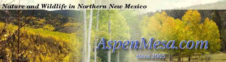 AspenMesa.com / Wildlife in Northern New Mexico